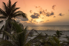 Sunset in Tulum. Palm trees blowing in the sea breeze at sunset on a luxurious sandy beach shore Stock Photo
