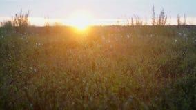 Sunset in the tundra. The Yamal peninsula. Sunset in the tundra at summer. The Yamal peninsula stock footage