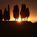 Sunset in Tuscany. The sun against the silhouette of some cypresses in Tuscany Stock Image