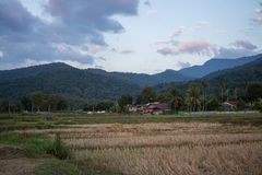Sunset twilight of green rice field in Pua. The  northern of Thailand Royalty Free Stock Photos