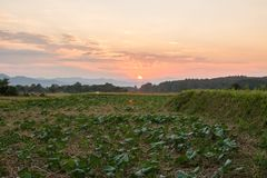 Sunset twilight of green rice field in Pua. The  northern of Thailand Stock Image