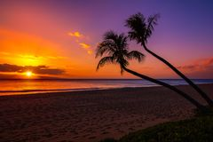 Sunset with two palm trees. Sunset in Hawaii with two palm trees after sunset Stock Photo