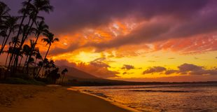 Sunset with two palm trees. Sunset in Hawaii with two palm trees after sunset Royalty Free Stock Image