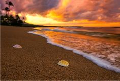 Sunset with two shells and ocean water. Sunset in Hawaii with two shells and beach with sunset Stock Photography