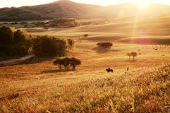 Sunset under the grassland Stock Photos