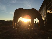 Sunset under a horse. A sunset under the belly of a horse, making a very artsy Stock Photos