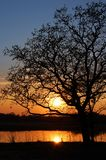 Sunset under lake. Sunset and tree silhouette under forest lake Stock Photography