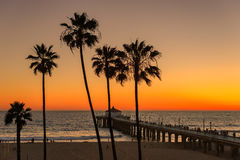 Sunset  under palm trees and Manhattan Beach Pier Royalty Free Stock Image