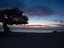 Sunset under tree on Eagle beach, Aruba royalty free stock photography