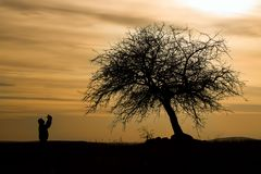 The Man silhouette. At sunset under the tree the man who prayed Stock Images