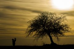 The Man silhouette. At sunset under the tree the man who prayed Royalty Free Stock Image