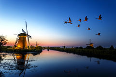 Sunset at Unesco world heritage windmills. Kinderdijk windmill, Unesco world heritage site at the bleu hour sunset with gease flying over the windmills royalty free stock photos