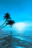 sunset vab palm Zdjęcie Stock