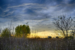 Sunset in Vacaresti Natural Park, Bucharest, Romania. HDR landscape with dark sky, field with trees in autumn, evening, dry grass, wetlands, meadow Stock Photo