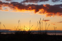 Sunset at Vadum Beach in Salling, Denmark - series. Colorful sunset at Vadum beach in Salling, Denmark. Grass in front of sunset Stock Photography