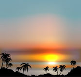 Sunset vector background with sea and palm trees. Stock Images