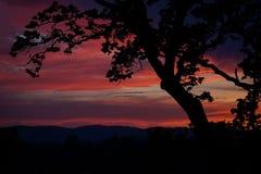 Sunset in Victoria, British Columbia. Garry Oak Silhouette, Victoria, British Columbia Stock Photography