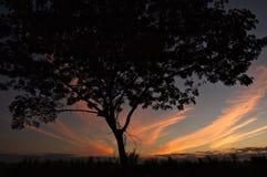 Sunset in Vientiane, Laos. Lone tree silhouette against a sunset in Vientiane, Laos Stock Photography