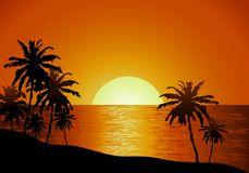 Sunset view in beach with palm tree Royalty Free Stock Images