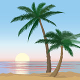 Sunset View beach resort with palm trees wallpaper. Summer holidays background. Sunset View Poster. Vector beach resort wallpaper. Ocean landscape. Sea view Royalty Free Stock Photo