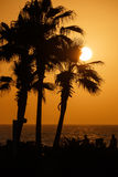 Sunset. View on sunset behind palm trees Stock Photography