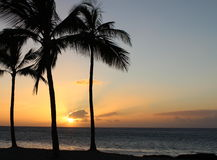 Sunset View from the Big Island of Hawaii. Sunset with Palm Tree view from the Big Island of Hawaii Stock Photos