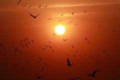 Sunset with view of birds Royalty Free Stock Photo