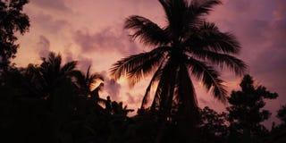 Sunset view with cat stock photos