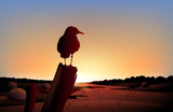 A sunset view of the desert with a big bird Stock Photos
