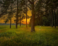 Sunset, view from forest Royalty Free Stock Images