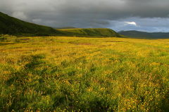 Sunset view of grassland full of yellow flowers Royalty Free Stock Photo