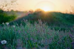 Sunset. View on green grass and sunset stock images