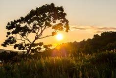 Sunset view of  isle Putyatin Royalty Free Stock Images