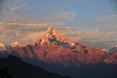 Sunset view of Machapuchare fish trail Royalty Free Stock Images