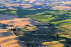 Sunset view of Palouse Royalty Free Stock Photo