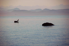 Sunset view. Picture of a Heron bird,taken by sunset, at Quadra Island,BC,Canada Stock Photo