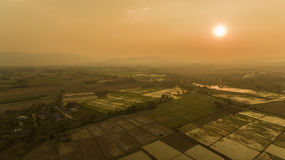 Sunset view of rice fields Royalty Free Stock Image