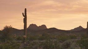 Sunset view of a saguaro cactus near gila bend in arizona