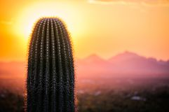 Sunset view of Saguaro tree in Sonoran desert. Sunset view of Sonoran desert with mountains and saguaro tree stock images