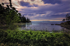 Sunset view of Samish Bay with foreground ferns and flowers. Image of a small cove off Samish Bay on Chuckanut Drive with foreground foliage and sunset sky royalty free stock photo