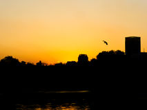 Sunset view in Shanghai Stock Photography