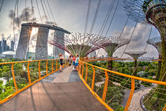 Sunset View of Supertree Grove at Gardens by the Bay Stock Photos