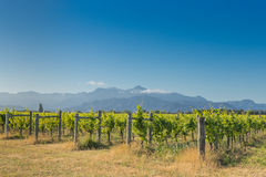 Sunset view of a vineyard against the distant mountains Royalty Free Stock Photos