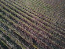Sunset vineyard aerial shot in autumn royalty free stock photo
