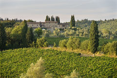 Sunset vineyard - Tuscany Stock Image