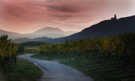 Sunset in the vineyards. Beautiful evening between castles and vineyards in Alsace near Dambach la Ville Stock Images