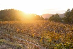 Sunset in the vineyards of the Priorat near de village of Morera. De Montsant, Tarragona province, Catalonia, Spain Royalty Free Stock Photos