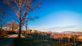 Sunset in the vineyards of Rosazzo Stock Photo