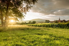 Sunset in the vineyards. View of the village of Mittelbergheim (Alsace, France) during sunset in the vineyards royalty free stock photos