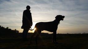 Sunset walk. Walk in sunset with dog Stock Image